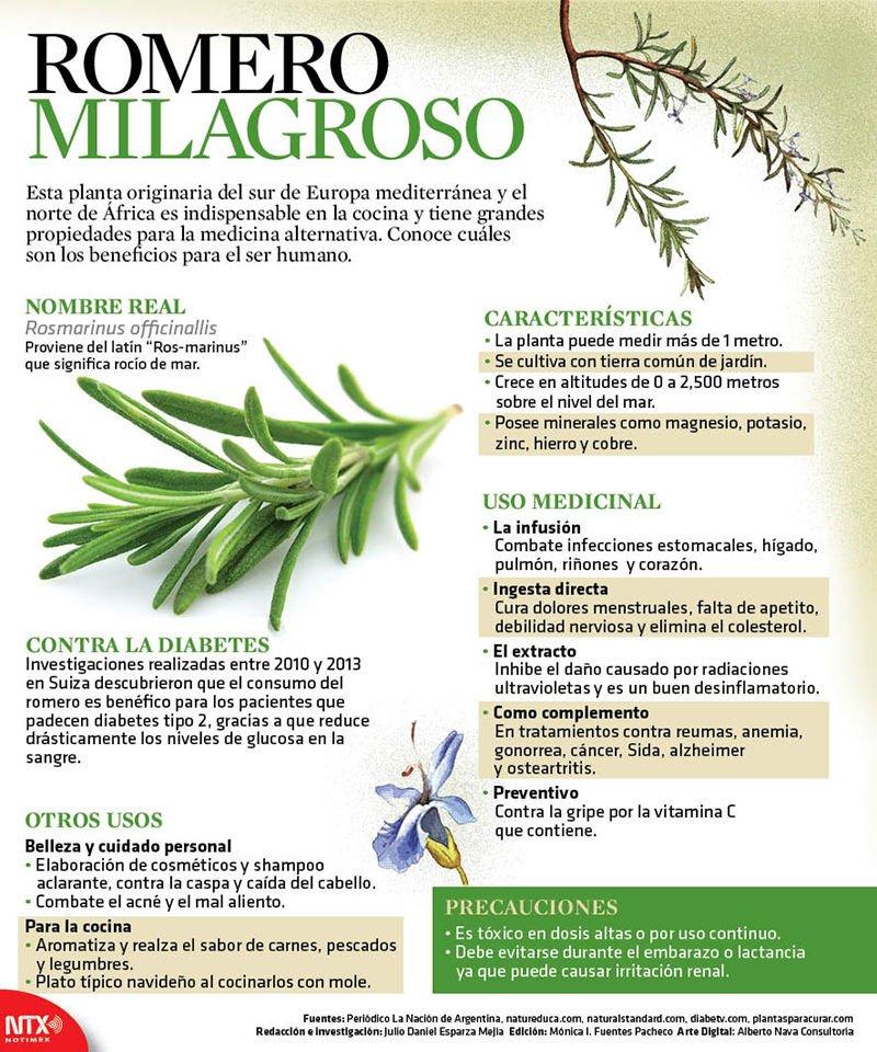 Beneficios propiedades y usos del romero for Tipos de hierbas medicinales