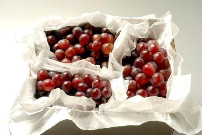 uvas prohibidas para los perros