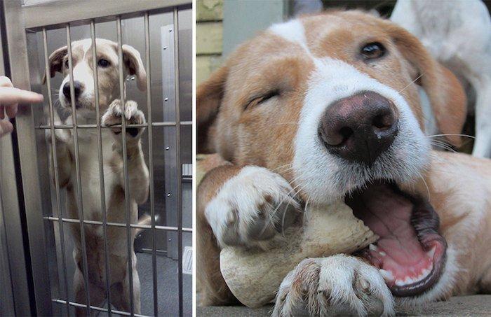 El antes y después de la adopción