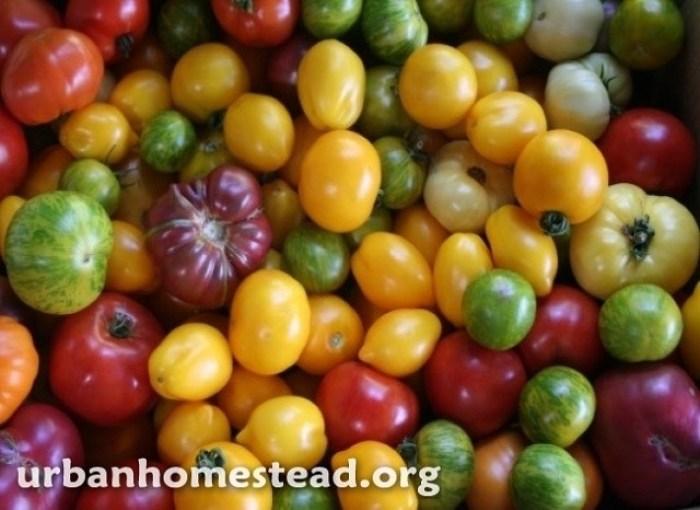 Como cultivar mas de 2700 kg de alimentos en 400 m2-2