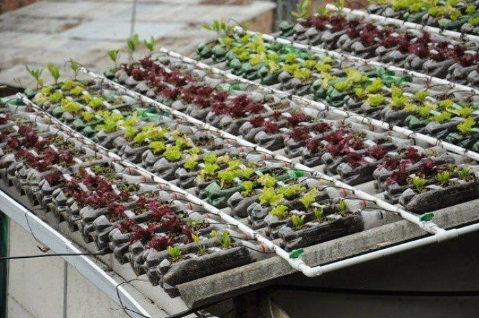 Techo verde los tejados que dan comida for Plastico para tejados