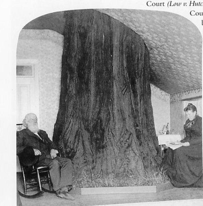 Resultado de imagen para Estas personas hicieron todo lo posible para salvar el árbol de su casa