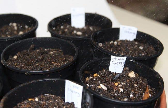 semillas de facil germinacion