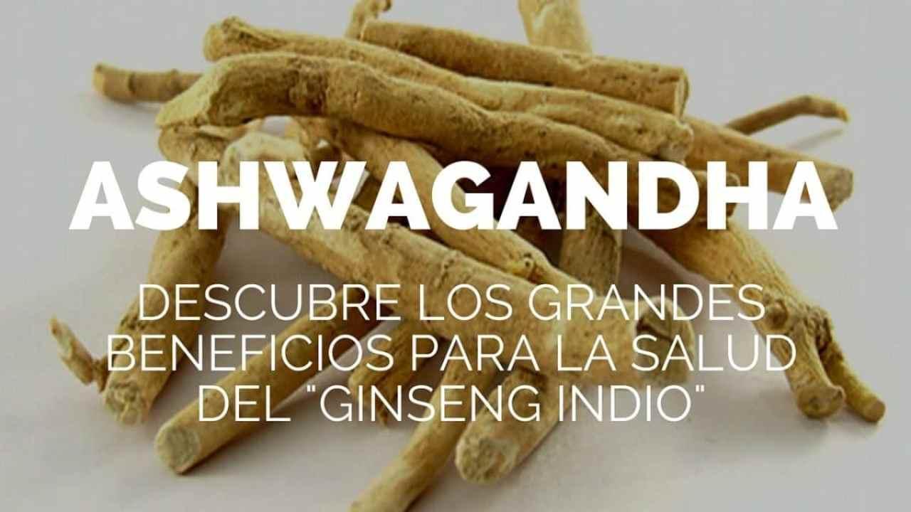 """Ashwagandha. Descubre los grandes beneficios para la salud del """"Ginseng indio"""""""