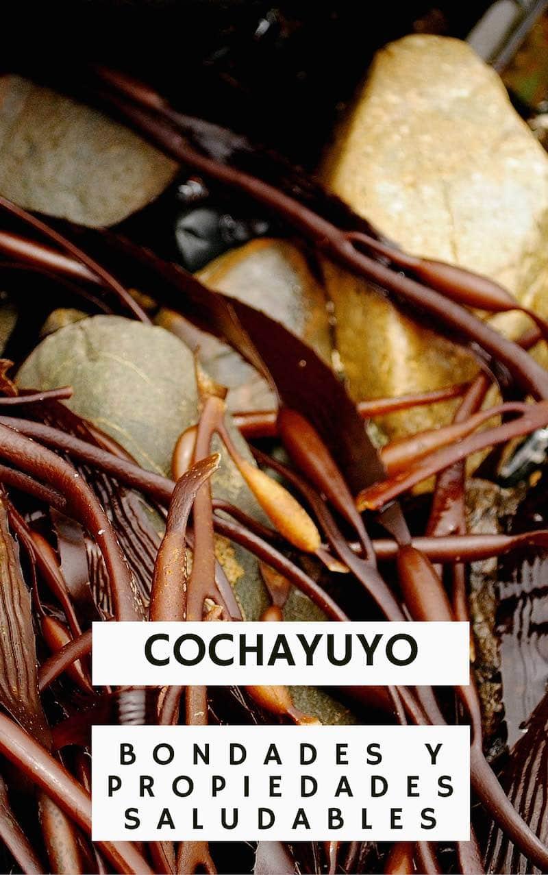 Cochayuyo, una superalga con grandes propiedades