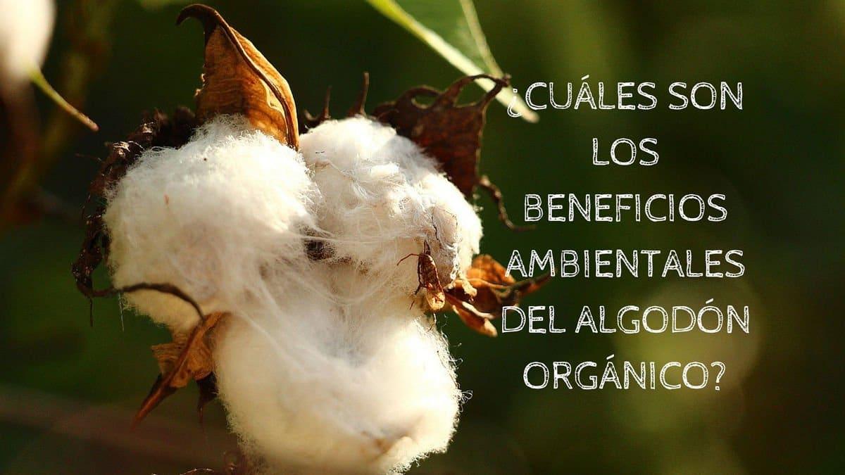 ¿Cuáles son los beneficios ambientales del algodón orgánico?