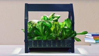 IKEA lanza un huerto hidropónico para cultivar alimentos en casa durante todo el año