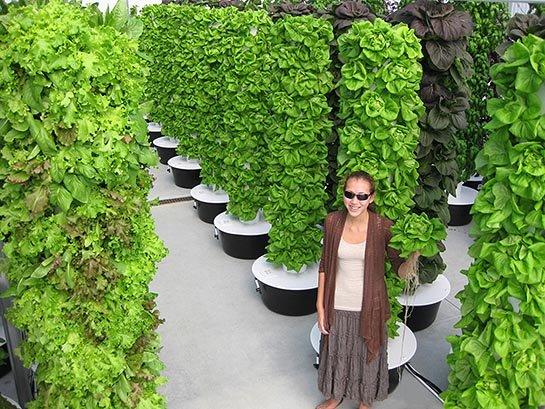 Ideas para montar un huerto vertical for Que es un jardin vertical