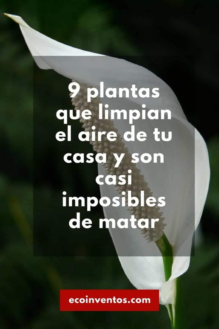 9 Plantas Que Limpian El Aire De Tu Casa Y Son Casi Imposibles De  ~ Plantas Que Limpian El Ambiente