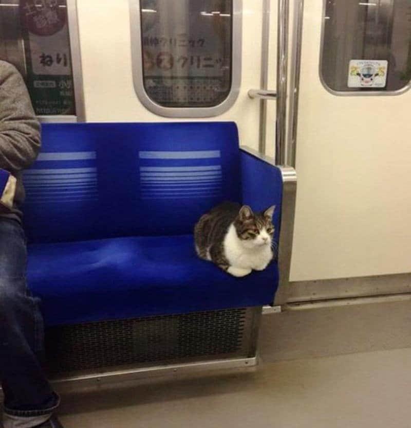 Conoce al Gato japonés que coge el Metro de Tokyo para desplazarse por la ciudad