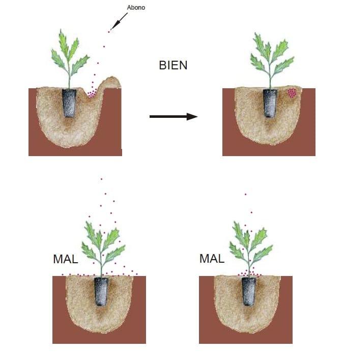 Manual Cómo plantar un árbol2