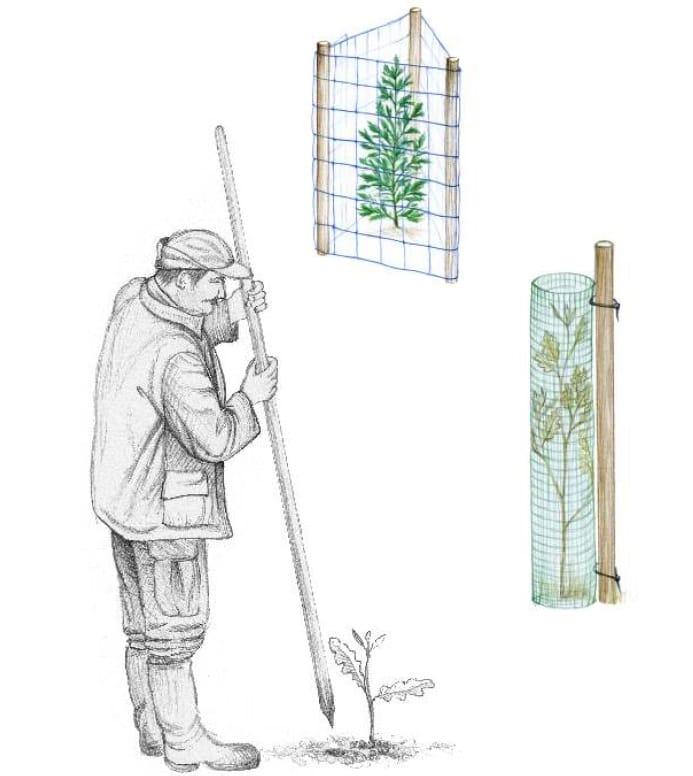 Manual Cómo plantar un árbol3