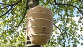 The Local Bee, la Colmena con la que podrás ayudar a las abejas