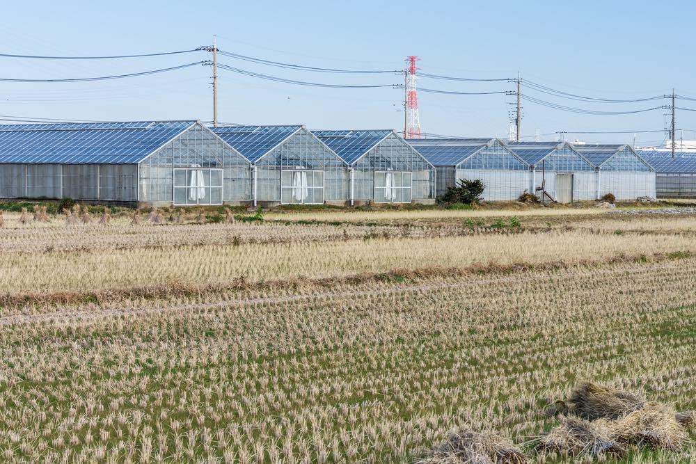 Los Invernaderos Solares El Futuro De La Energ 237 A Agrovoltaica