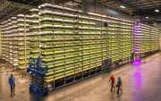 IKEA entre los inversores de un nuevo sistema de cultivo vertical sin tierra y con un 95% menos de agua