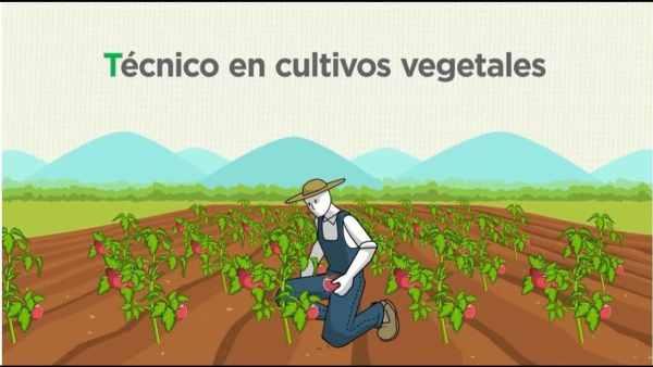 Tecnico-en-cultivos-vegetales