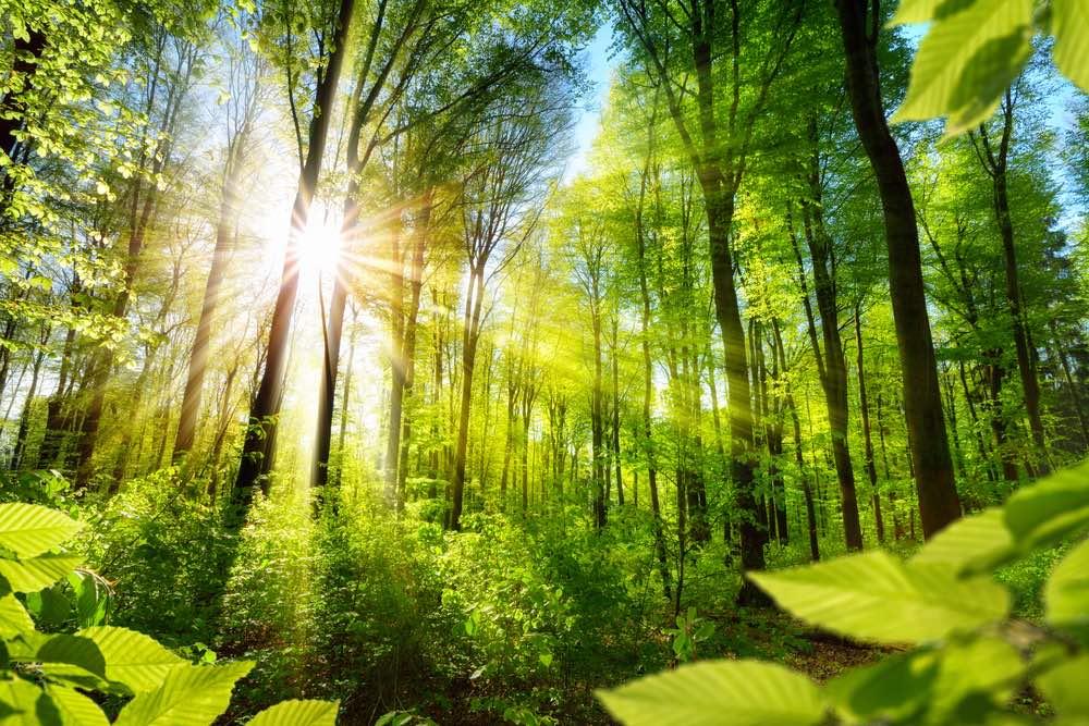 Bosques para luchar contra el cambio climático.