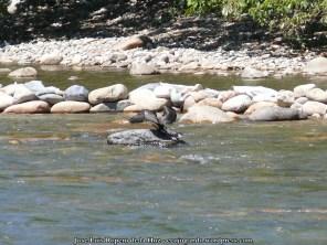 Ave acuática del río Guatapurí