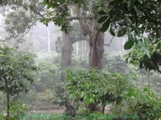 Bosque - Reserva Los Tananeos