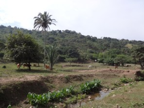 Manaure