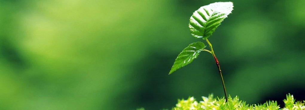 ecoland.it borraccia termica contatti prodotti ecologici