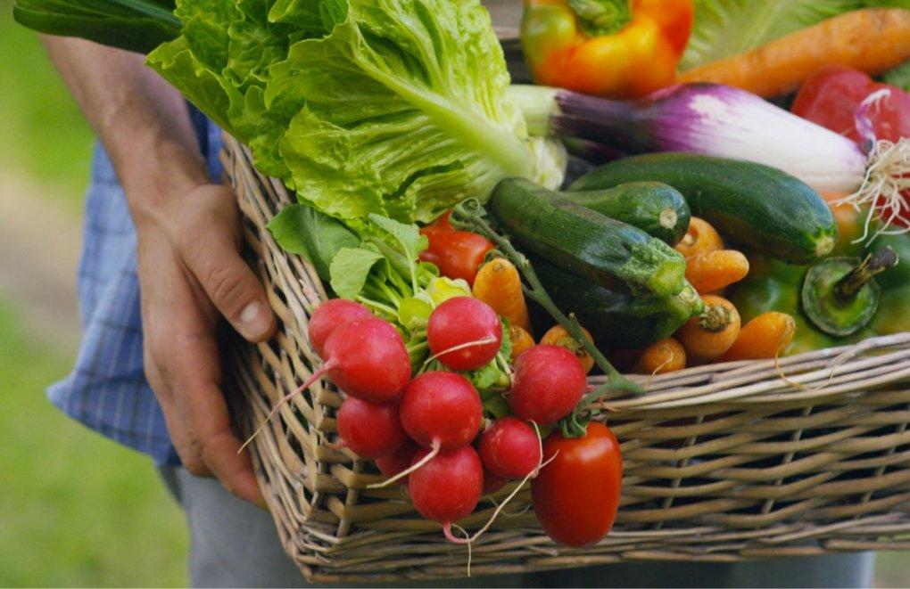 Agricoltura biologica, quello che devi sapere!