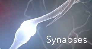 Synapses