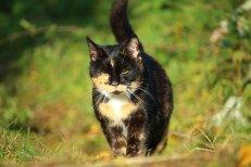 cat-1792363__340