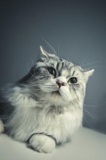 cat-1897223_960_720