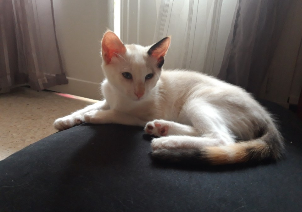 CHAT A ADOPTER – CASSANDRE
