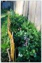 Dans le jardin des petits (photo)