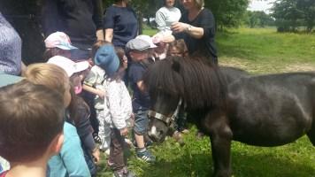 poneys_2