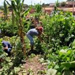 image: cash crops