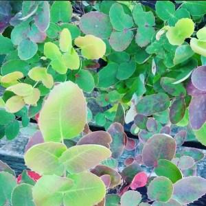 image: list perennial plants