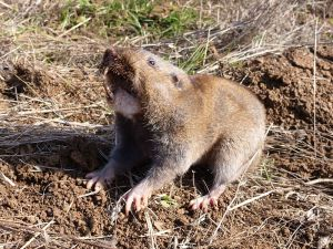 image: Humane Pest Control