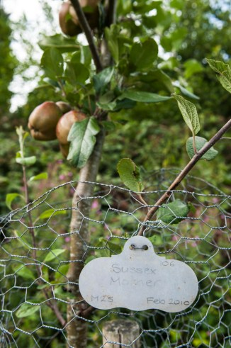 A tour of Stamner Park Orchards, East Sussex, with Peter May – 21st August 2016