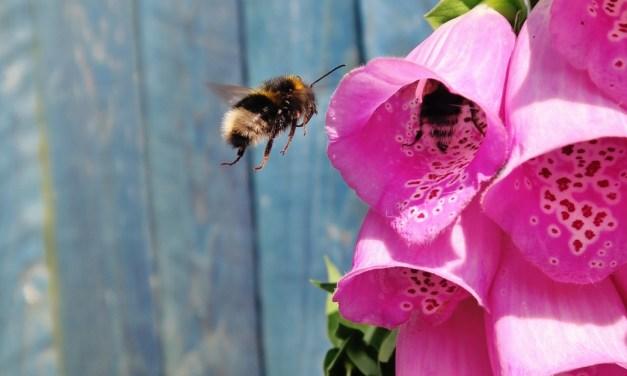 Help bijen met bloemen