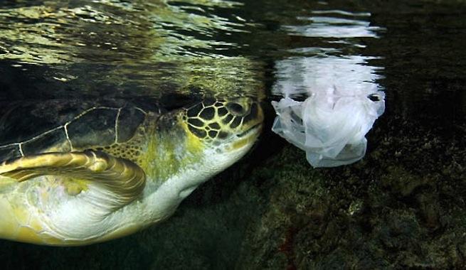 Reducir los peligros ambientales de las bolsas de plástico