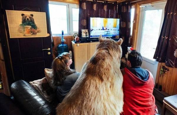 """Publicația """"The Daily Mail"""" a publicat un articol despre o familie din Rusia, în care trăiește un urs brun, Stepan. Autorii materialului vorbesc cu entuziasm despre prădătorul blînd."""