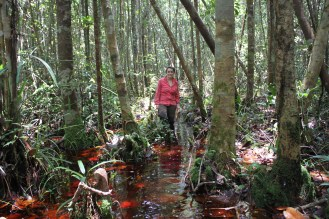 Flooded peat swamp forest (photo: Andri Thomas)