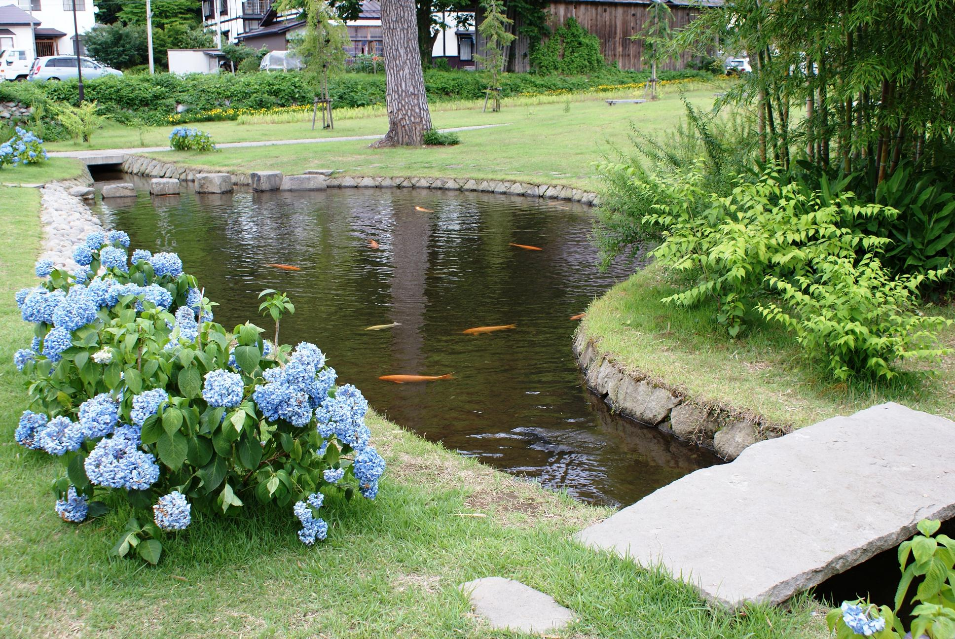 Small Outside Fish Ponds