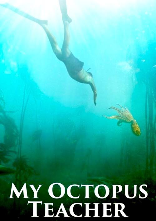 my-octopus-teacher-netflix