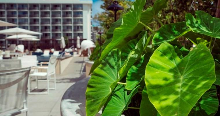 Ecotourism: Harvesting Kalo in Waikiki