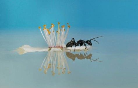 Reflejo hormiga y flor