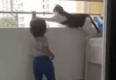 """Gato llamado """"El guardián"""" se hizo viral en TikTok"""