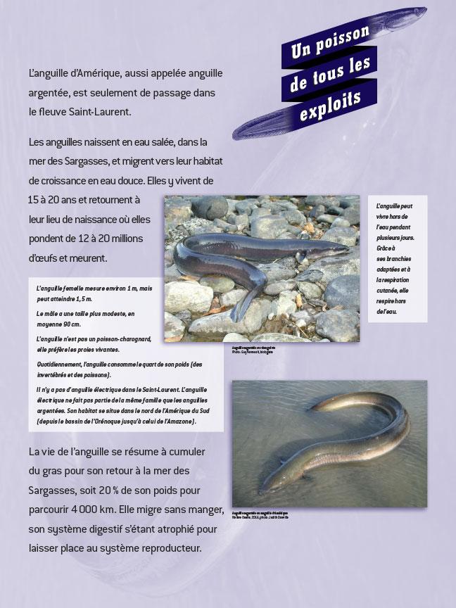 Panneau sur les exploits de l'anguille