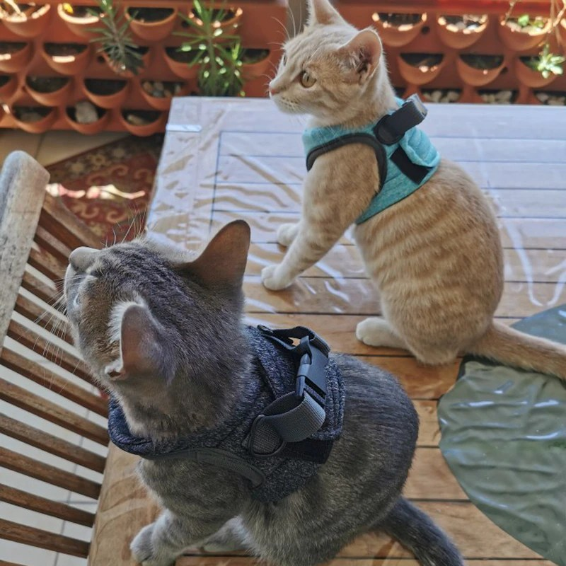 Adjustable-Cat-Harness-Pet-Anti-Escape-Harnessleash-Set-Breathable-Soft-Vest-For-Small-Dogs-Cats-Outdoor (2)