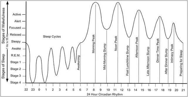 90-минутный цикл активности