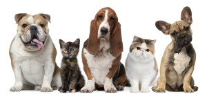 Weekly economic news roundup and pets' healthcare spending