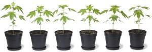 Colorado recreational marijuana regulation